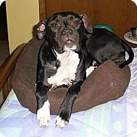 Adopt A Pet :: Jerzee - Muskegon, MI