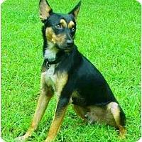 Adopt A Pet :: Cody - Mocksville, NC