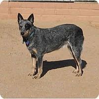 Adopt A Pet :: Betsey - Phoenix, AZ