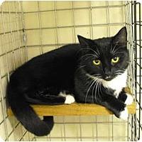 Adopt A Pet :: Stash - Mission, BC