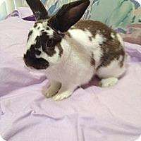 Adopt A Pet :: Oryo - Lakeland, FL