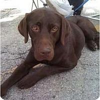 Adopt A Pet :: Crystal Grace - Kansas City, MO