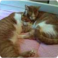 Adopt A Pet :: Tiger & Sergio - Delmont, PA
