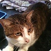Adopt A Pet :: Ranger - Columbia, MD