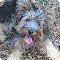Adopt A Pet :: Quiz - Austin, TX