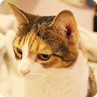 Adopt A Pet :: Bounce - North Highlands, CA
