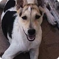 Adopt A Pet :: Mumu - Gilbert, AZ