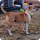 Adopt A Pet :: Lucy