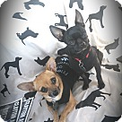 Adopt A Pet :: Peeta and Prim