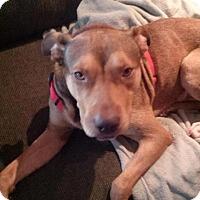 Adopt A Pet :: Baird - Rocky Mount, NC