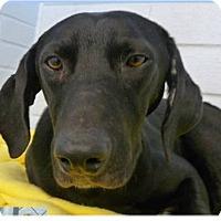 Adopt A Pet :: Rex - Springdale, AR