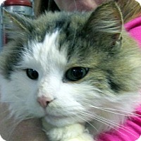 Adopt A Pet :: Ben - Germantown, MD