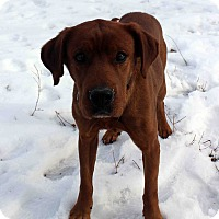 Adopt A Pet :: Montgomery - Westminster, CO