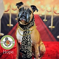 Adopt A Pet :: Hope - Oceanside, CA