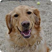 Adopt A Pet :: Chloe - Meridian, ID