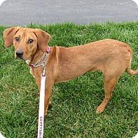 Adopt A Pet :: Ivanaka - New Oxford, PA