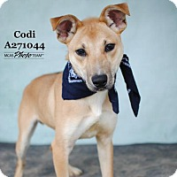 Adopt A Pet :: CODI - Conroe, TX