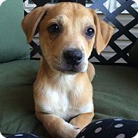 Adopt A Pet :: Waffle - Greensboro, GA