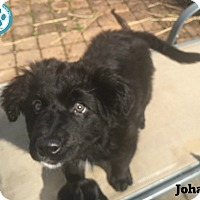 Adopt A Pet :: Johann - Kimberton, PA
