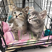 Adopt A Pet :: Twig - Chicago, IL