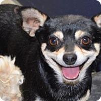 Adopt A Pet :: Enzo - Winchester, CA