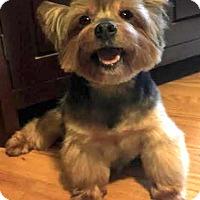 Adopt A Pet :: Holliston - Sinking Spring, PA