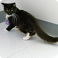 Adopt A Pet :: Piper - Victor, NY