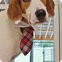 Adopt A Pet :: Spot - Chambersburg, PA