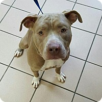 Adopt A Pet :: Nala - Hillsboro, NH