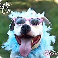 Adopt A Pet :: Blanca - Franklin, TN