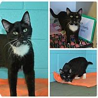Adopt A Pet :: Oliver - Bishopville, SC
