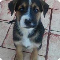 Adopt A Pet :: Emily - Oakland Park, FL