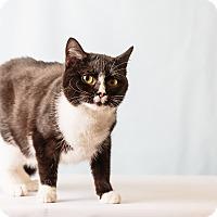 Adopt A Pet :: Clover - Hendersonville, NC
