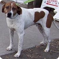 Adopt A Pet :: NORMAN - Albany, NY