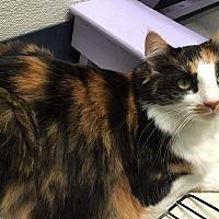 Adopt A Pet :: Fiona - Topeka, KS