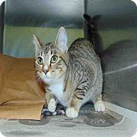 Adopt A Pet :: Dizzy - St. Cloud, FL