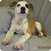Adopt A Pet :: Patch - Glastonbury, CT