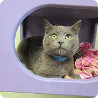 Adopt A Pet :: Spike - Medina, OH