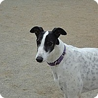 Adopt A Pet :: Royce - Roanoke, VA