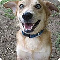 Adopt A Pet :: Boo Boo - Thomasville, NC