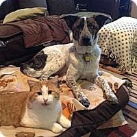 Adopt A Pet :: Hamlet - Saskatoon, SK