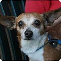 Adopt A Pet :: Star - Canoga Park, CA