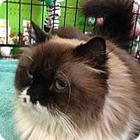 Adopt A Pet :: Maryland - Beverly Hills, CA