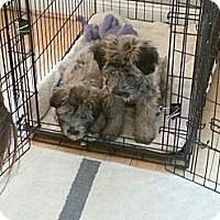 Adopt A Pet :: Sunny - Clarksburg, MD