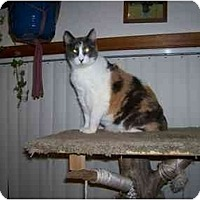 Adopt A Pet :: praise - Davis, CA