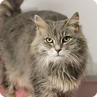 Adopt A Pet :: Jup - Queenstown, MD