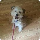 Adopt A Pet :: Neeko (COURTESY POST)