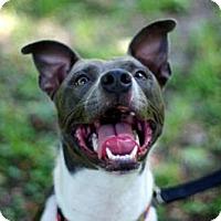 Adopt A Pet :: Chelsea - Gainesville, FL