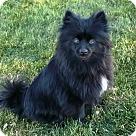Adopt A Pet :: Bianca