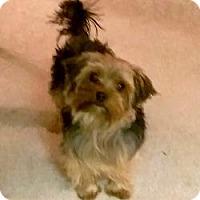 Adopt A Pet :: Charlie - Bettendorf, IA